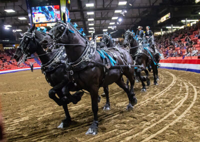 Horse team pulling wagon around arena