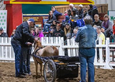 Farmer demontrating a miniature horse drawn carriage to the crowd.