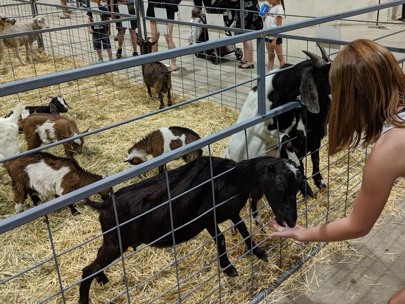 A variety of animals at the Petting Zoo at the Manitoba Summer Fair, Brandon, Manitoba