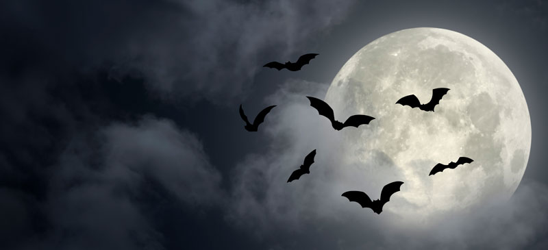 A dark sky with a full moon. Bats fly in front of the moon in silhouette.